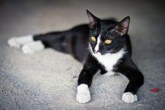 Un gato negro Fotos de archivo libres de regalías