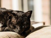 Un gato negro descansa sobre una silla en el sol de la tarde Foto de archivo