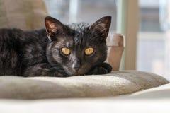 Un gato negro descansa sobre una silla en el sol de la tarde Imagenes de archivo