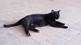 Un gato negro sin hogar vaga alrededor de la calle Imagen de archivo
