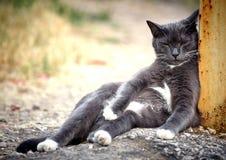 Un gato negro soñoliento se inclinó en un polo del metal Se sienta en una actitud divertida fotos de archivo libres de regalías