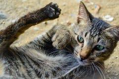 Un gato no más abrazo Foto de archivo libre de regalías