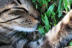 Un gato pacífico el dormir imagen de archivo