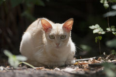 Un gato perdido. Fotografía de archivo libre de regalías