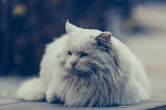 Un gato perdido Imagen de archivo