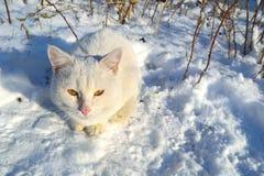 Un gato perdido Fotos de archivo