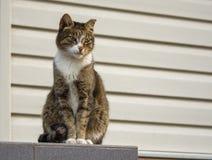 Un gato perdido duro con los ojos verdes que mira la vecindad Fotos de archivo libres de regalías