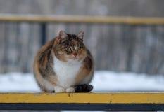 Un gato perdido en un banco en el parque Foto de archivo