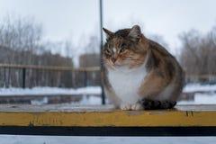 Un gato perdido en un banco en el parque Fotos de archivo libres de regalías