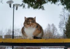 Un gato perdido en un banco en el parque Fotografía de archivo