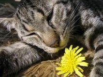 Un gato que duerme con la flor Fotografía de archivo