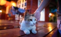 Un gato que es jugado Fotos de archivo libres de regalías