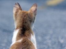 Un gato que mira hacia fuera para su futuro Imagen de archivo