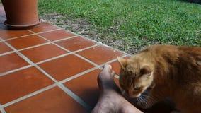 Un gato que muestra el afecto almacen de metraje de vídeo