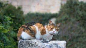 Un gato que se relaja al aire libre Foto de archivo libre de regalías