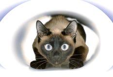 Un gato que se sienta dentro del tonnel de papel Imágenes de archivo libres de regalías