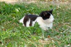 Un gato que se sienta en la hierba Fotos de archivo libres de regalías