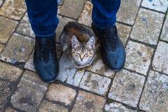 Un gato que se sienta en los pies de un hombre derecho Imagen de archivo