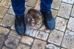 Un gato que se sienta en los pies de un hombre derecho Imagen de archivo libre de regalías
