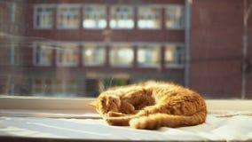 Un gato rojo duerme en un alféizar blanco en los rayos del ` s del sol metrajes