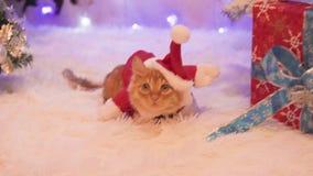 Un gato rojo vestido como Santa Claus se está sentando cerca de los regalos metrajes