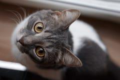 Un gato se sienta cerca de la ventana y mira para arriba Foto de archivo