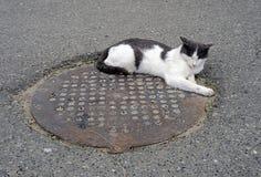 Un gato sin hogar Fotografía de archivo