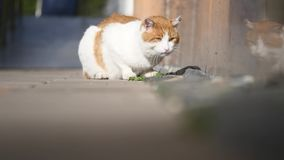 Un gato sin hogar y enfermo se está sentando en la calle Gato enfermo almacen de video