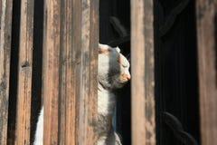 Un gato soñoliento dentro de una ventana de madera imágenes de archivo libres de regalías