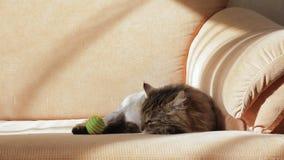 Un gato soñoliento juega reacio con una bola multicolora metrajes