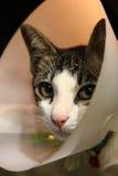 Un gato Socute fotografía de archivo libre de regalías