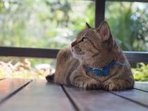 Un gato solo Fotos de archivo libres de regalías