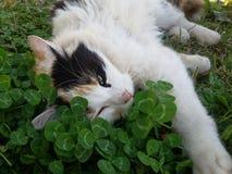 Un gato toma un resto con un ojo abierto en hierba en karya del al Fotos de archivo