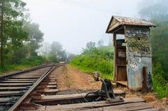 Un gato viejo al interruptor en las pistas de ferrocarril Imagen de archivo libre de regalías