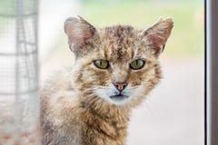 Un gato viejo mira en la ventana y pide que a le se permita en t foto de archivo