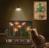 Un gato y flores de la salchicha imagenes de archivo
