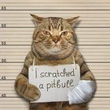 Un gato y un pitbull imagen de archivo