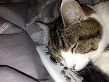 Un gato y su telecontrol Imagen de archivo libre de regalías