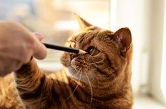 Un gato y sus lápices preferidos fotos de archivo libres de regalías