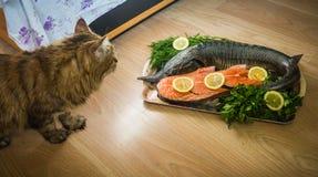 Un gato y un esturión adornados con el limón y eneldo y perejil Foto de archivo