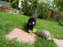 Un gato y una tortuga Foto de archivo libre de regalías