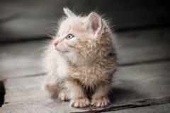 Un gattino Fotografia Stock Libera da Diritti