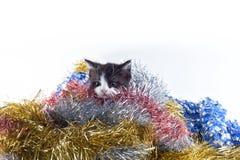 Un gattino Fotografia Stock