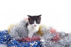 Un gattino Immagini Stock Libere da Diritti
