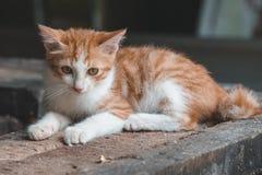 Un gattino arancio Immagini Stock Libere da Diritti