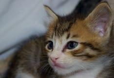 Un gattino calmo fotografia stock libera da diritti