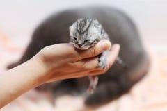 Un gattino del giorno scorso sveglio Fotografie Stock