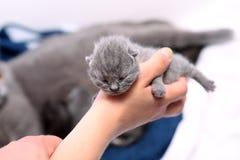 Un gattino del giorno scorso sveglio Immagine Stock Libera da Diritti