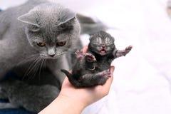 Un gattino del giorno scorso sveglio Fotografie Stock Libere da Diritti