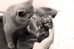 Un gattino del giorno scorso sveglio Fotografia Stock